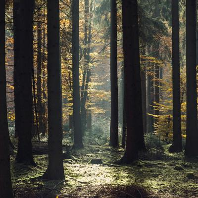 https://imgc.allpostersimages.com/img/posters/the-autumnal-teutoburg-forest-with-sunlight_u-L-Q1EXN2U0.jpg?artPerspective=n