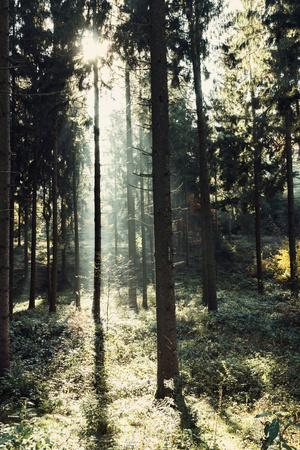 https://imgc.allpostersimages.com/img/posters/the-autumnal-teutoburg-forest-with-sunlight_u-L-Q1EXNFP0.jpg?artPerspective=n