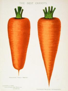 The Best Carrots, Illustration from 'Harrisons' Seed Catalogue' C.1900
