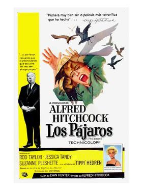 The Birds, (aka Los Pajaros), Alfred Hitchcock, Tippi Hedren, 1963