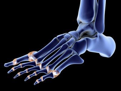 https://imgc.allpostersimages.com/img/posters/the-bones-of-the-foot_u-L-PZJB1G0.jpg?artPerspective=n
