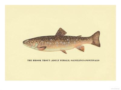https://imgc.allpostersimages.com/img/posters/the-brook-trout_u-L-P2DCXE0.jpg?p=0