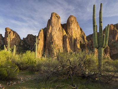 https://imgc.allpostersimages.com/img/posters/the-bulldogs-carnegiea-gigantea-goldfield-mountains-lower-salt-river-arizona-usa_u-L-Q11YXGH0.jpg?p=0