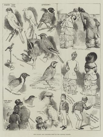 https://imgc.allpostersimages.com/img/posters/the-canary-and-cage-bird-show-at-the-crystal-palace_u-L-PUGBC70.jpg?p=0