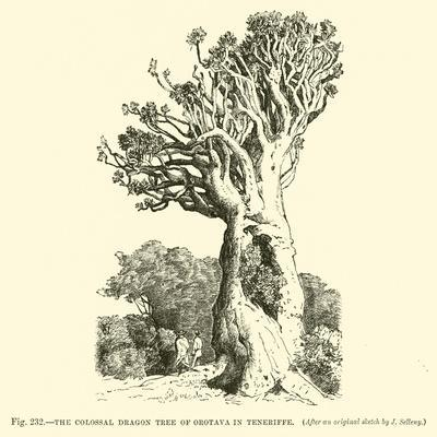 https://imgc.allpostersimages.com/img/posters/the-colossal-dragon-tree-of-orotava-in-teneriffe_u-L-PP5JVY0.jpg?artPerspective=n