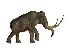 The Columbian Mammoth, an Extinct Species of Elephant