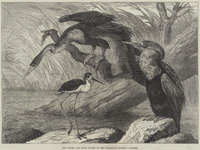 https://imgc.allpostersimages.com/img/posters/the-darter-and-stilt-plover-in-the-zoological-society-s-gardens_u-L-PUSNQ40.jpg?p=0