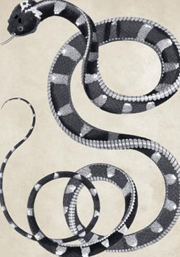 Coluber - Fierce Viper - Silver by The Drammis Collection