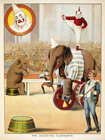 The Educated Elephants'. an Involving Elephants and Clowns in a Circus