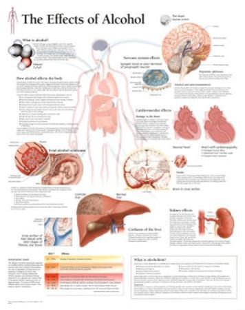 The Effects of Alcohol Educational Chart Poster