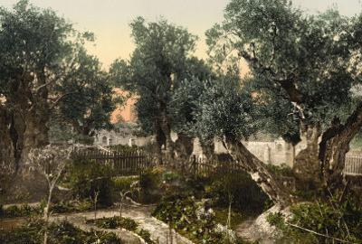 The Gardem of Gethsemane