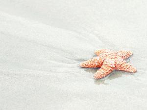 Coral Starfish by The Gingham Owl