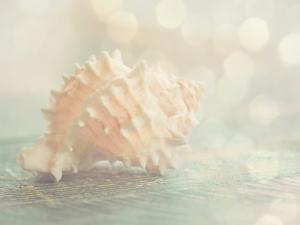 Dreamy Shell by The Gingham Owl