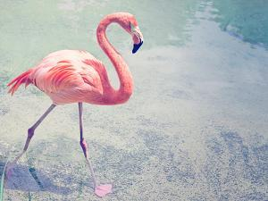 Flamingo Strut by The Gingham Owl