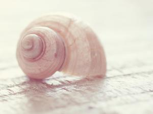 Pink Shell by The Gingham Owl
