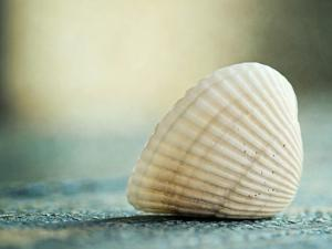 Seashell Blue by The Gingham Owl