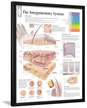 The Integumentary System Wall