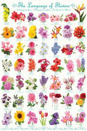 https://imgc.allpostersimages.com/img/posters/the-language-of-flowers_u-L-F8SX4I0.jpg?p=0
