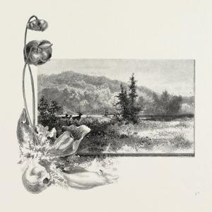 The Lower St. Lawrence, Home of the Pitcher Plant, Canada, Nineteenth Century
