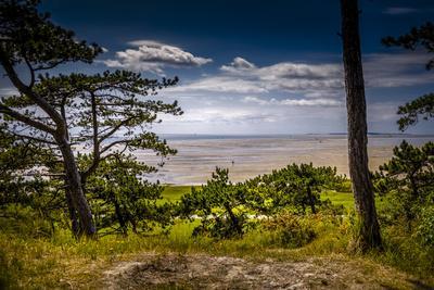 https://imgc.allpostersimages.com/img/posters/the-netherlands-frisia-terschelling-dunes-pine-pinewood_u-L-Q11YNYK0.jpg?p=0