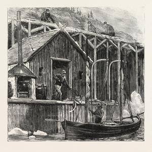 The Newfoundland Fisheries Question: British Fishing Room on the French Shore, Canada, 1890