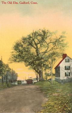 The Old Elm, Guilford, Connecticut