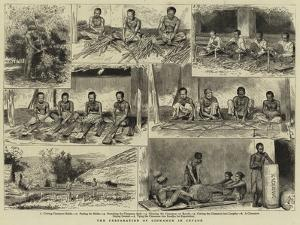 The Preparation of Cinnamon in Ceylon