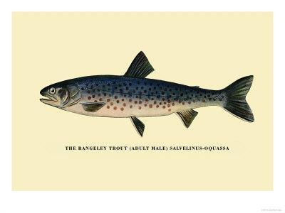 https://imgc.allpostersimages.com/img/posters/the-rangeley-trout_u-L-P2DCWN0.jpg?p=0