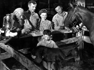 The Red Pony, Louis Calhern, Shepperd Strudwick, Myrna Loy, Peter Miles, Robert Mitchum, 1949