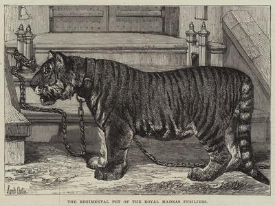 https://imgc.allpostersimages.com/img/posters/the-regimental-pet-of-the-royal-madras-fusiliers_u-L-PUSOLF0.jpg?artPerspective=n