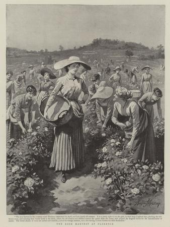 https://imgc.allpostersimages.com/img/posters/the-rose-harvest-at-florence_u-L-PUMZUF0.jpg?p=0