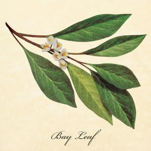Bayleaf by The Saturday Evening Post