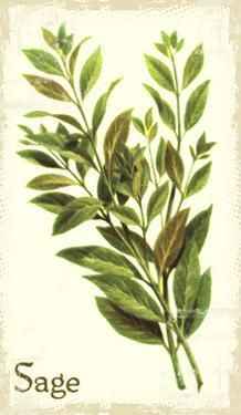 Sage antique by The Saturday Evening Post