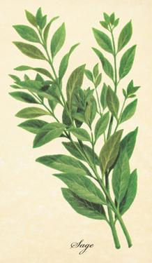 Sage by The Saturday Evening Post