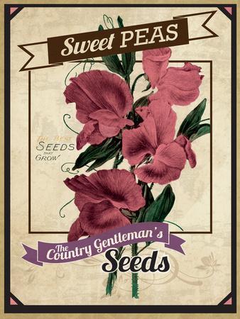 Seed Packet - Sweet Peas