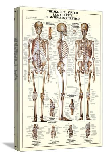 The Skeletal System--Stretched Canvas