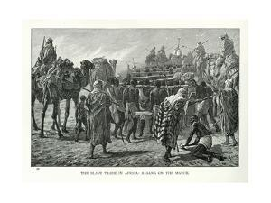 The Slave Trade in Africa: a Gang on the March