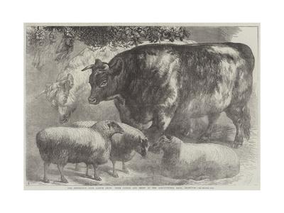 https://imgc.allpostersimages.com/img/posters/the-smithfield-club-cattle-show-prize-cattle-and-sheep-at-the-agricultural-hall-islington_u-L-PUSM1N0.jpg?p=0