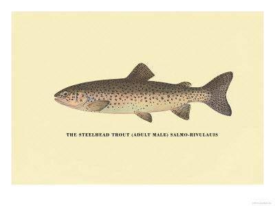 https://imgc.allpostersimages.com/img/posters/the-steelhead-trout_u-L-P2DCYW0.jpg?p=0