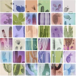 Analog Cacti by THE Studio