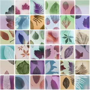 Analog Leaves by THE Studio