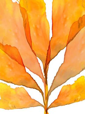 Autumn Leaves 2 by THE Studio