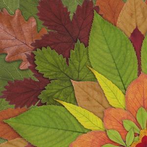 Fall Leaf Mandala 1 by THE Studio