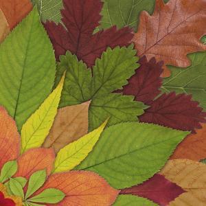 Fall Leaf Mandala 2 by THE Studio