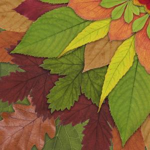 Fall Leaf Mandala 3 by THE Studio