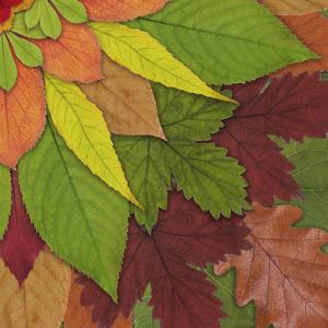 Fall Leaf Mandala 4 by THE Studio