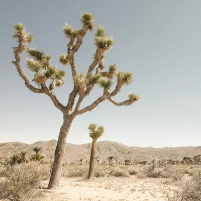 Joshua Tree 1 by THE Studio
