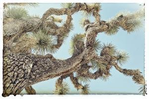 Joshua Tree 2 by THE Studio