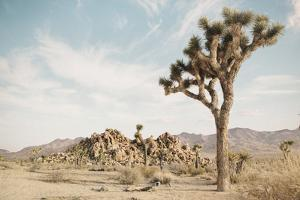 Joshua Tree 3 by THE Studio