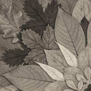 Leaf Mandala A by THE Studio
